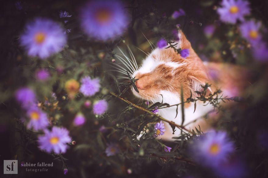 Je photographie mon chat sans yeux qui voit avec les yeux du coeur (25 photos)