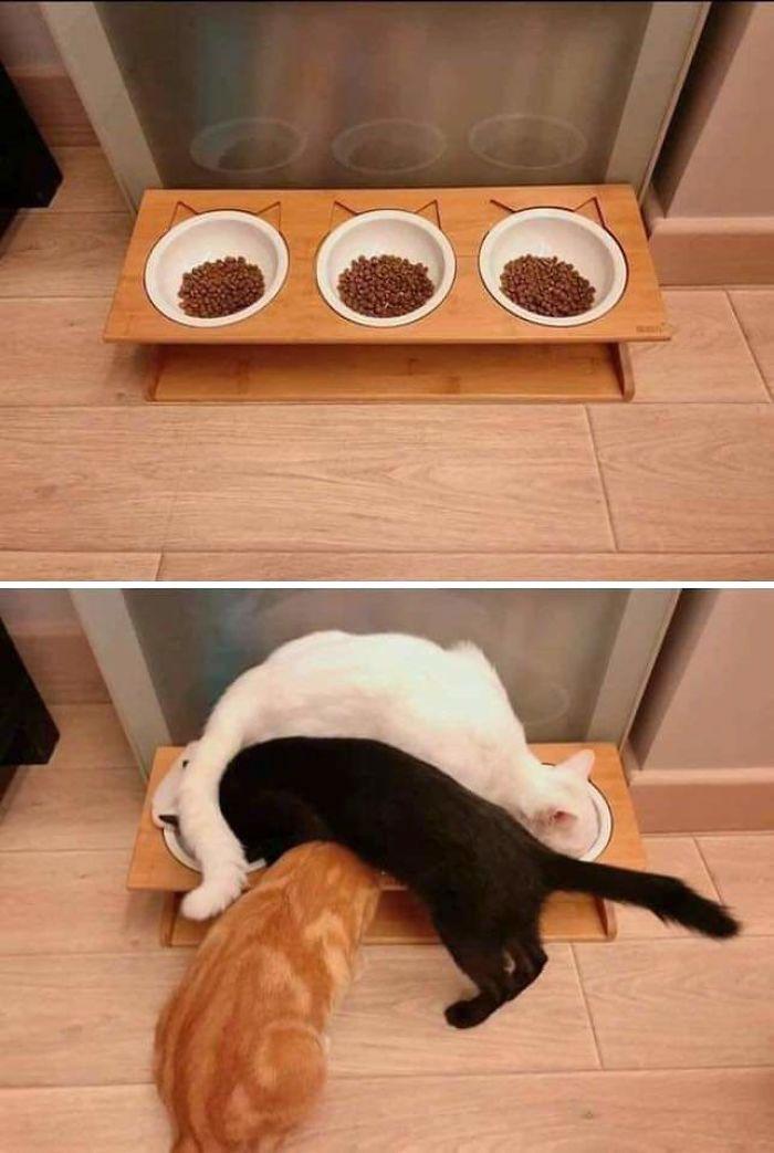 37 fois où des chats nous ont fait pleurer de rire