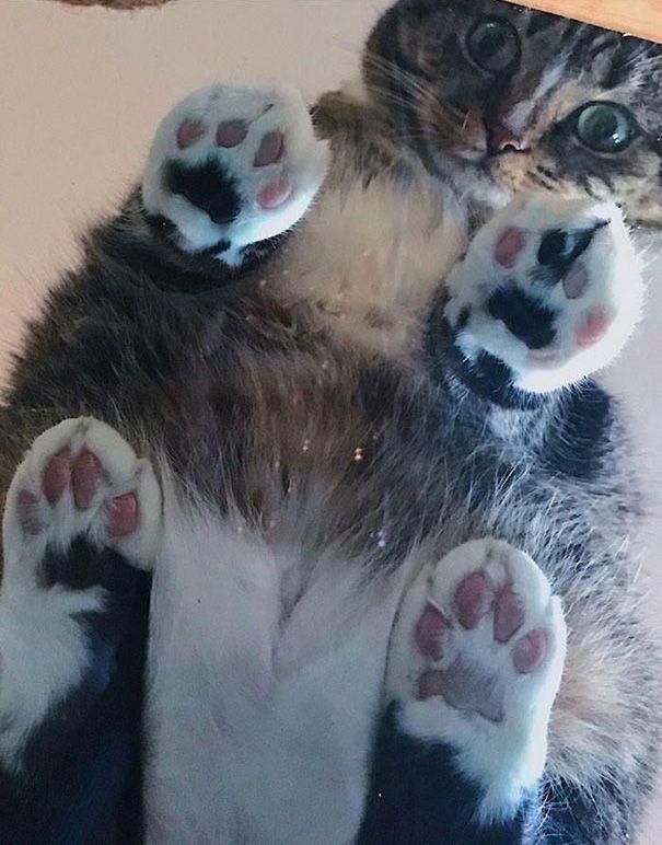 """Résultat de recherche d'images pour """"chat qui dort dans un lit"""""""