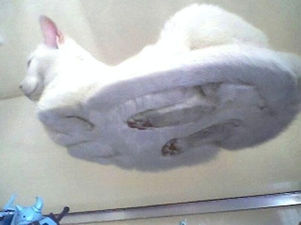 33 raisons hilarantes pour lesquelles tous les propriétaires de chats devraient avoir une table en verre
