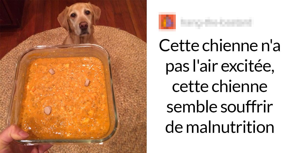 Cette végane a publié des photos de son labrador «excité» de manger son dîner végane, mais elle s'est fait clouer le bec par un vétérinaire