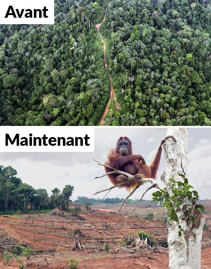 22 photos désolantes de la nature pour le 10 year challenge