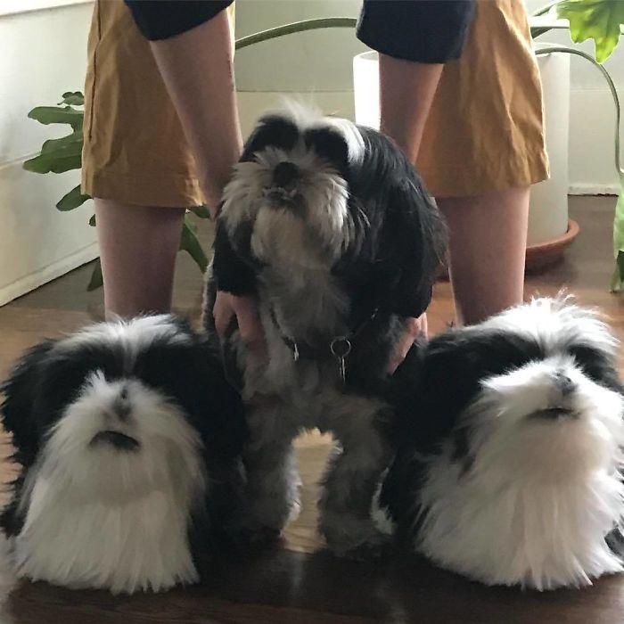 Cette entreprise fabrique des pantoufles qui ressemblent à vos animaux de compagnie et elles sont tellement réalistes que les chiens en sont jaloux