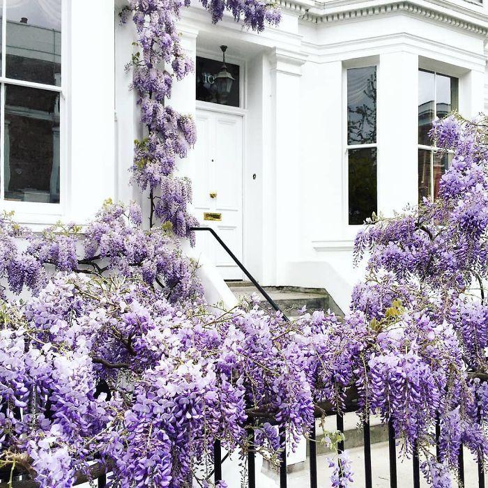 Cette femme a photographié les plus belles portes d'entrée de Londres et elles ont l'air tout droit sorties d'un film de Wes Anderson