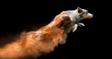 J'ai jeté de la poudre sur des chiens et le résultat est à couper le souffle (13 images)
