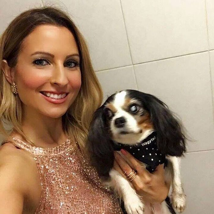 Le gouvernement britannique a interdit la vente de chiots dans les animaleries quand cette histoire de chien déchirante est devenue virale