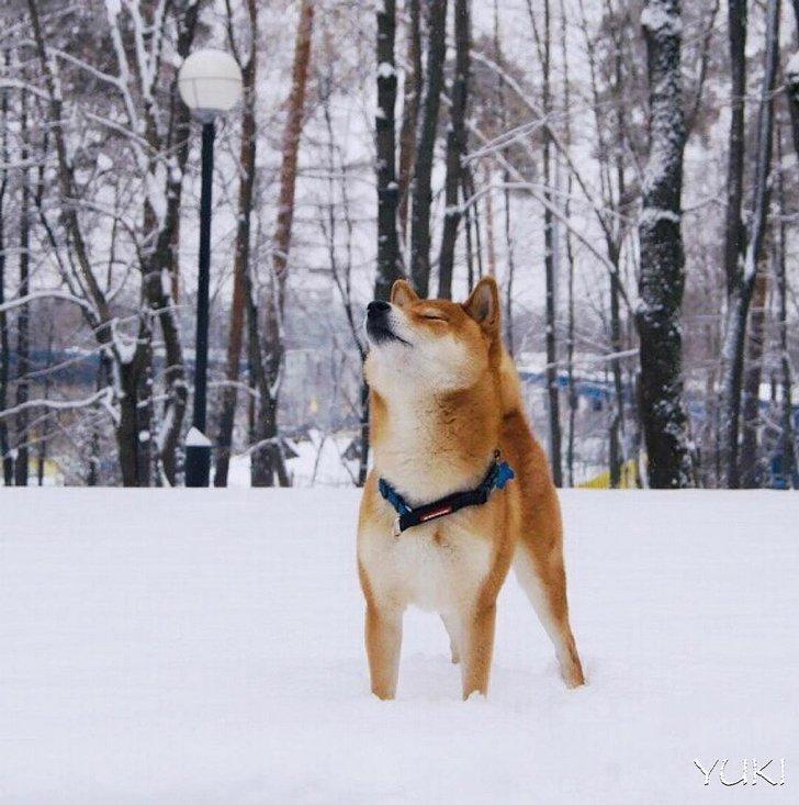 25 images sympas qui prouvent que les animaux de compagnie rendent la vie bien plus amusante