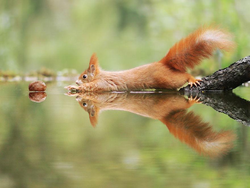 33 photos amusantes d'animaux sauvages par un photographe autrichien primé