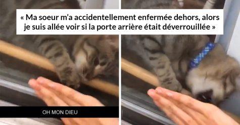 Ce chat a enlevé une barre en bois pour laisser sa propriétaire entrer après qu'elle se soit enfermée dehors