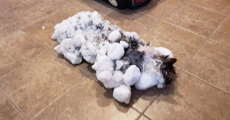 Une chatte gelée dans la neige a miraculeusement guéri après que des vétérinaires eurent passé des heures à se battre pour sa vie
