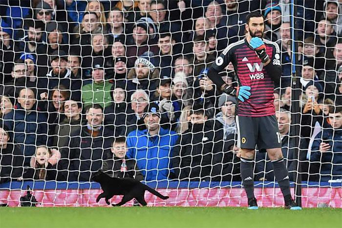 Un chat noir est entré dans un match de football et sans surprise, il a refusé de partir