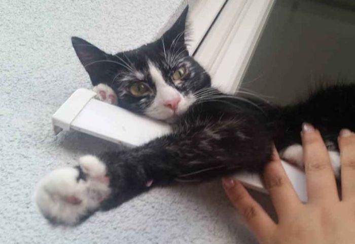 Une femme a sauvé une chatte atteinte d'une maladie rare appelée vitiligo et de magnifiques taches qui ressemblent à des flocons de neige sont apparues sur sa robe