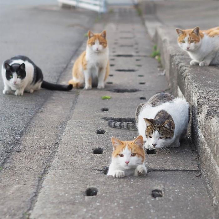 Ce photographe prend des photos de chats errants qui s'amusent et ne se préoccupent pas du monde (43 photos)