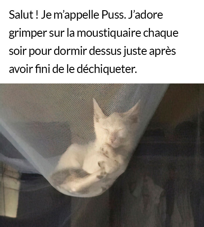 23 vilains chats qui méritent d'être humiliés en public