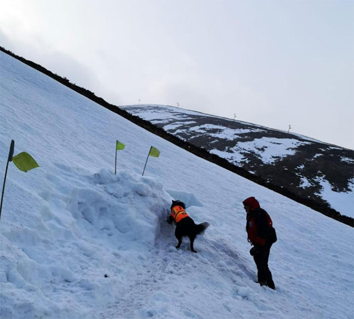 Enseveli sous la neige, cet homme a filmé un chien d'avalanche qui l'a sauvé et c'est adorable