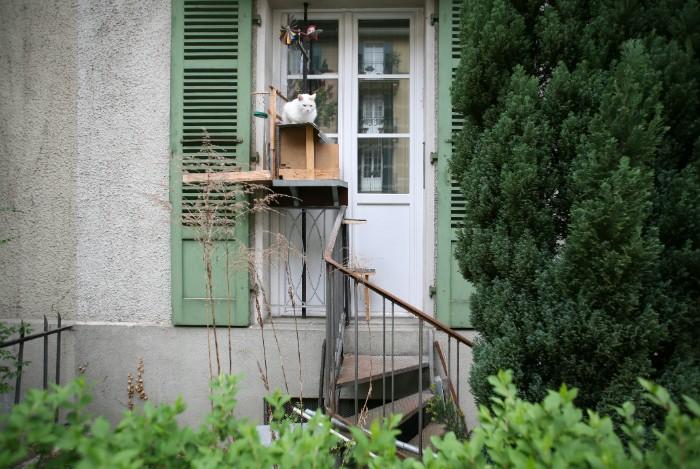 Cette photographe a documenté le phénomène des échelles pour chats en Suisse (22 photos)