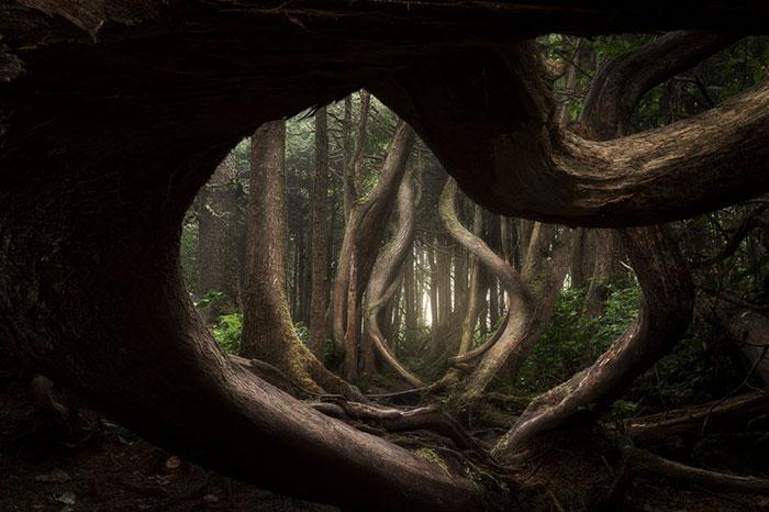 22 photos les plus mémorables du concours international du photographe de paysage de l'année