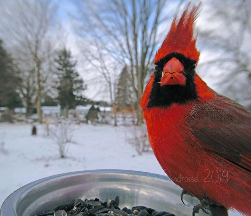 Cette femme a installé une cabine photo pour les oiseaux dans sa cour et les résultats sont extraordinaires (30 photos)