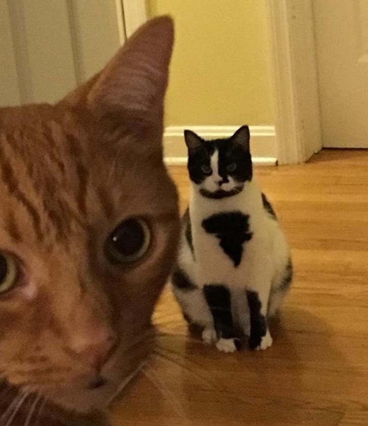 31 chats aux robes les plus insolites de tous les temps (nouvelles images)