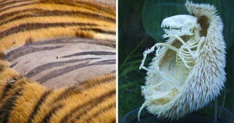 24 images révélatrices qui prouvent que la nature regorge de mystères