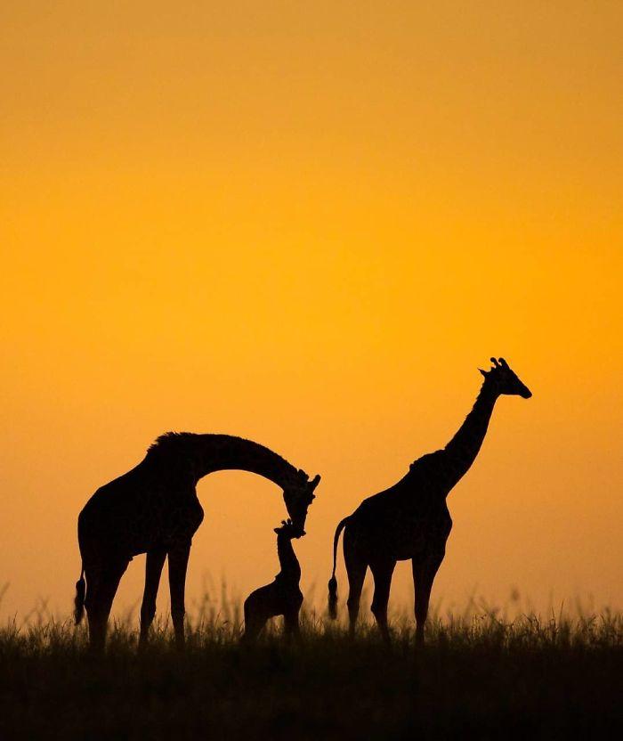 30 plus belles photos du concours de photographie Instagram de National Geographic