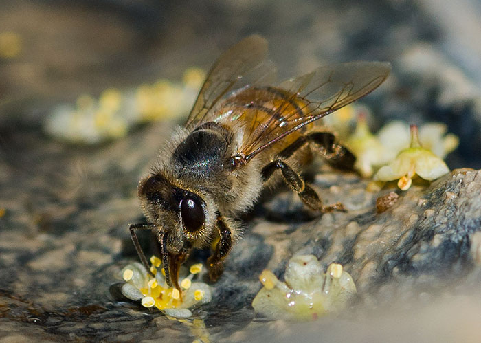 9 petites choses que tu peux faire pour aider les abeilles à survivre
