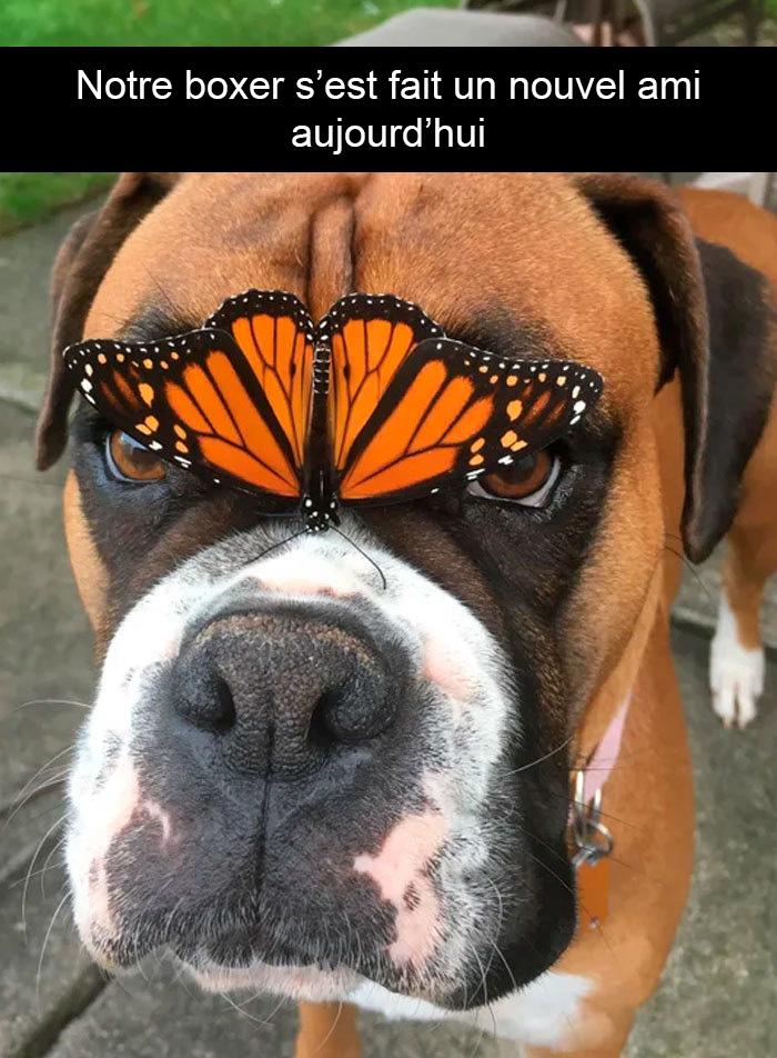 26 photos de chiens avec des légendes drôles et adorables qui vont égayer ta journée