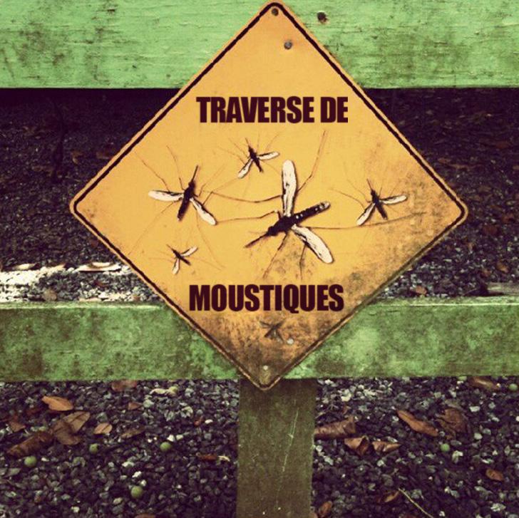 6 astuces naturelles pour éloigner les moustiques de ton corps
