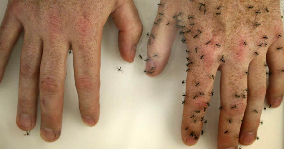 6 astuces naturelles pour éloigner les moustiques de votre corps