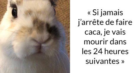 Une propriétaire de lapin a expliqué pourquoi vous ne devriez jamais en obtenir un avant Pâques