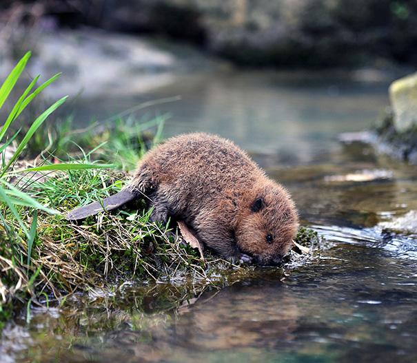 22 adorables bébés castors pour célébrer la Journée internationale du castor