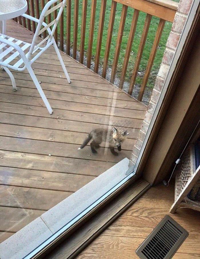 Des bébés renards sont apparus chez cette personne et leurs photos sont adorables