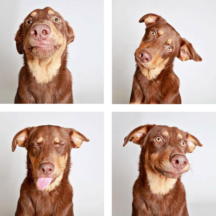 Ces chiens de refuge ont été photographiés dans une cabine photo pour les aider à se trouver une maison (25 images)