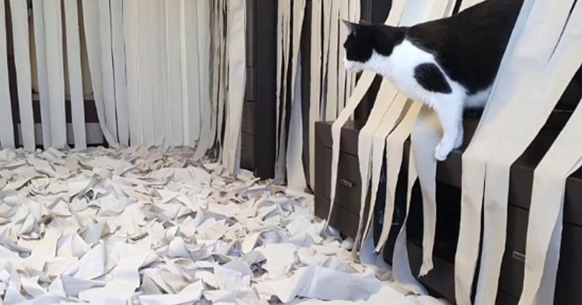 Cette vidéo d'un chat qui devient fou dans une pièce remplie de papier toilette est devenue virale