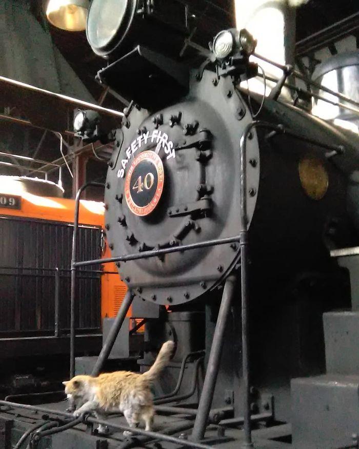 Voici «Dirt», un chat qui vit sur un chemin de fer et qui a toujours l'air d'avoir besoin d'un bain