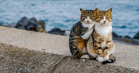 J'ai photographié deux chats errants qui se faisaient un câlin et je jure que ce n'est pas une mise en scène