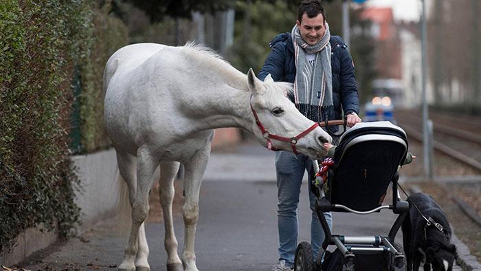 Ce cheval se promène seul tous les jours depuis 14 ans et reçoit des câlins et des friandises des résidents