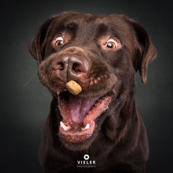 Des expressions hilarantes de chiens qui tentent d'attraper des friandises dans les airs (nouvelles images)