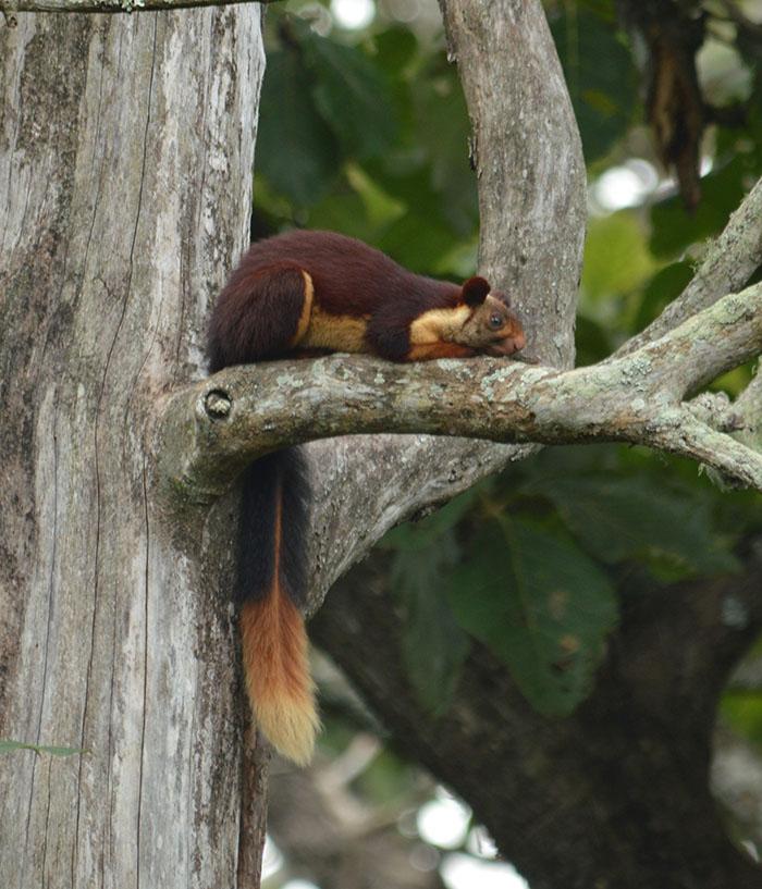 Ces écureuils géants multicolores vivent en Inde et les gens viennent juste de le découvrir (17 images)
