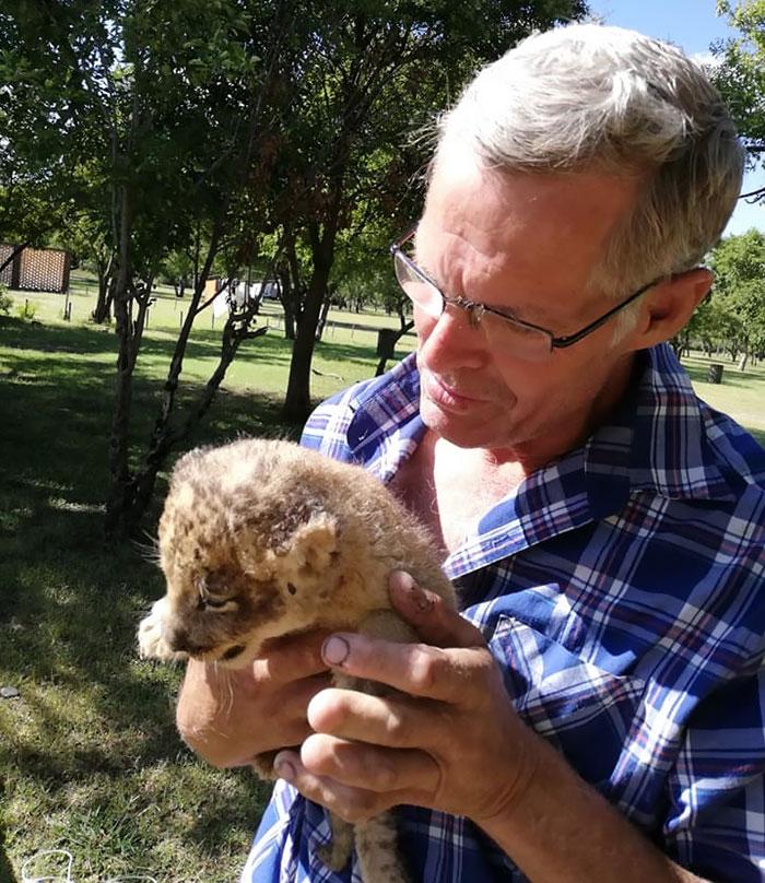 Cet homme pensait qu'il était assez spécial pour caresser un lion et il a fini par subir une grave blessure
