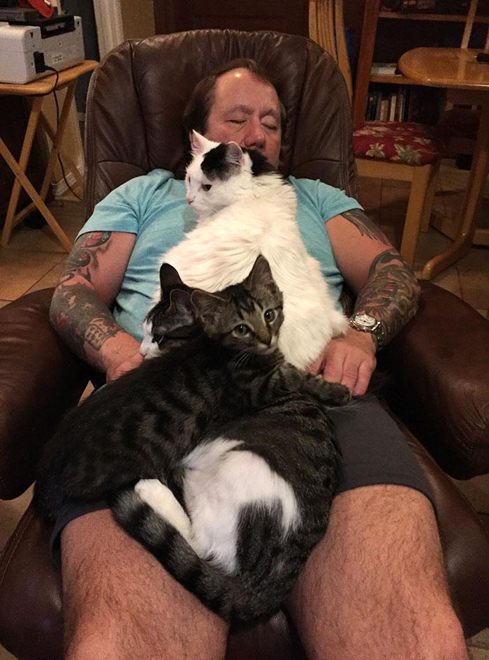 22 photos de papas de chats et leurs amis poilus les plus adorables de tous les temps