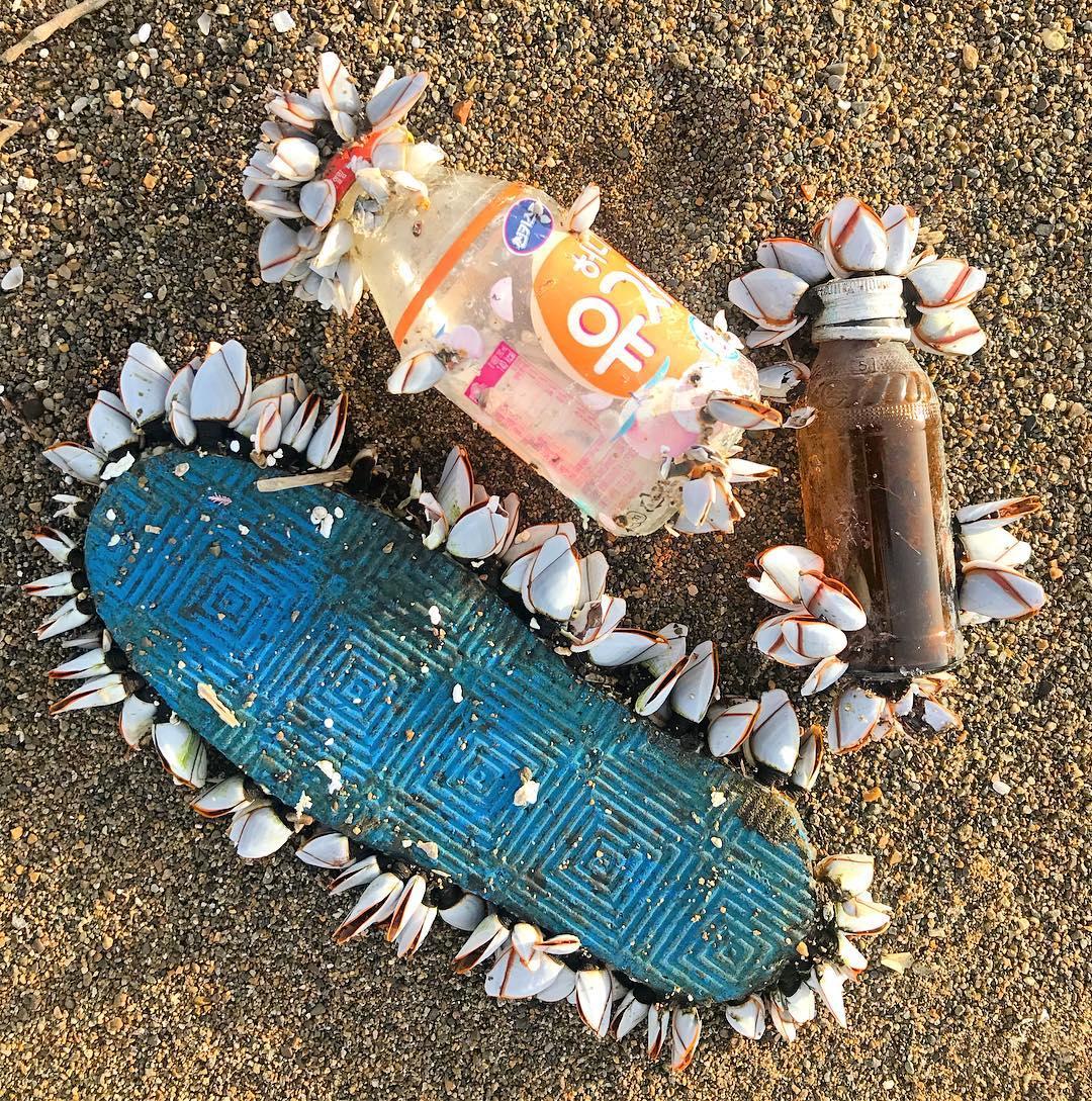 Une femme a inventé un nouveau type de plastique biodégradable dans l'eau et c'est un pas de géant pour la santé des océans