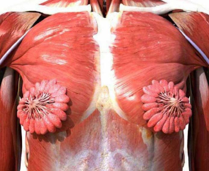 Les gens ne peuvent pas croire que cette photo de glandes mammaires féminines est réelle