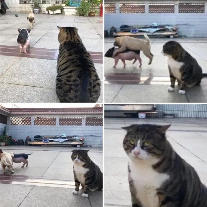 Ce chat est devenu viral à cause de ses réactions dramatiques et hilarantes (17 images)