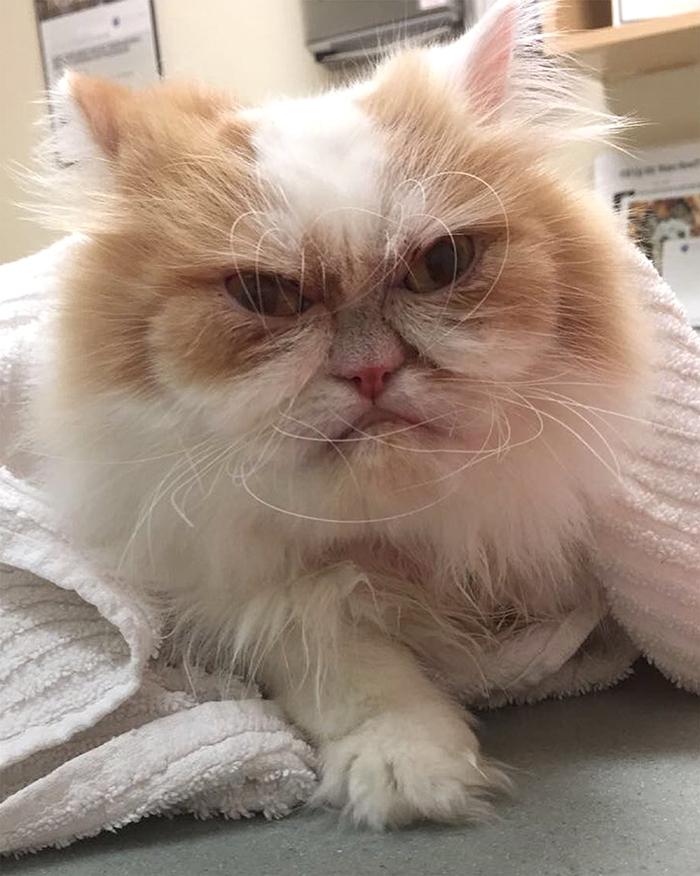 Internet a trouvé un nouveau Grumpy Cat