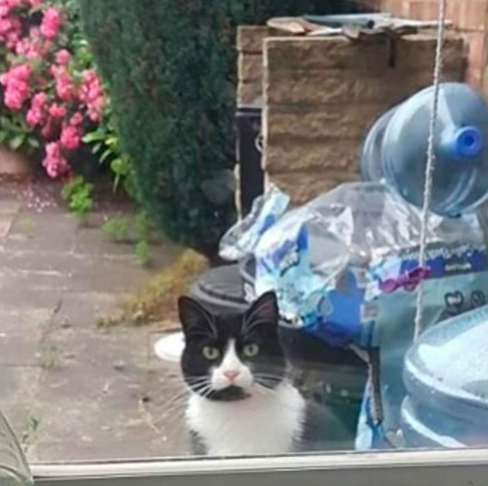 22 fois où des chats ont été publiquement humiliés pour leurs crimes hilarants