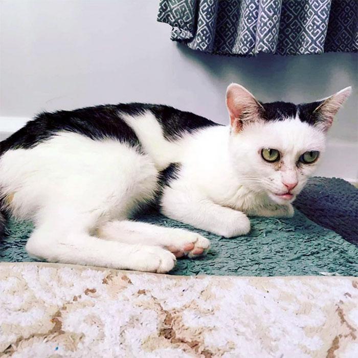Une femme a adopté une chatte qui vivait dans un refuge depuis l'âge de 2 jours et elle a réalisé qu'elle ressemble à Steve Buscemi