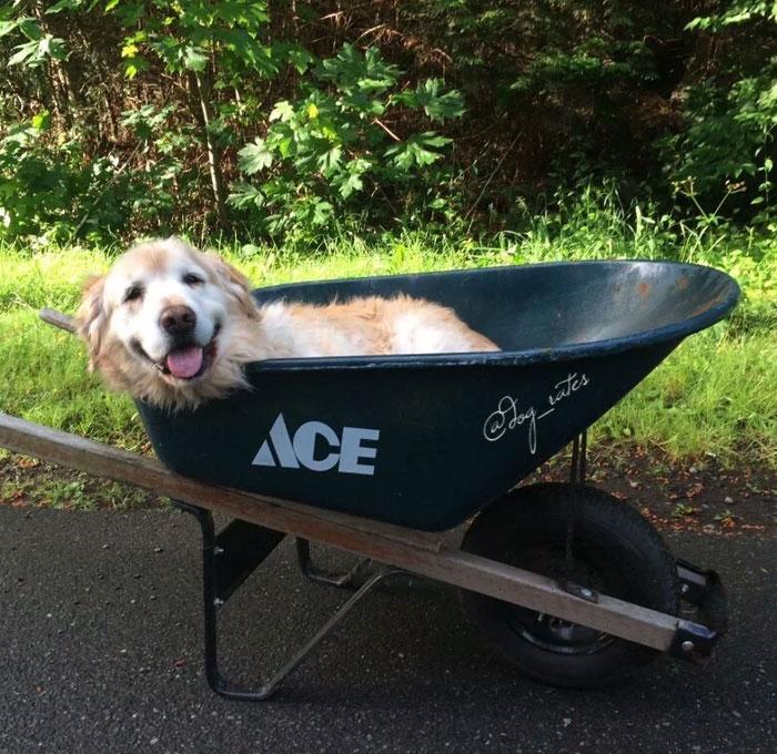 22 photos sympas de bons chiens-chiens âgés