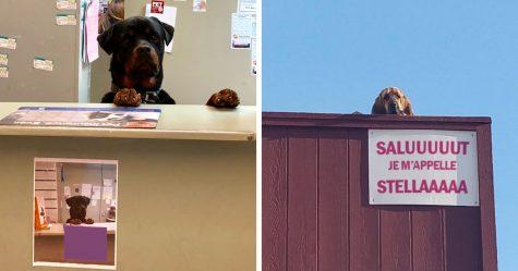 22 chiens qui ont de vrais emplois