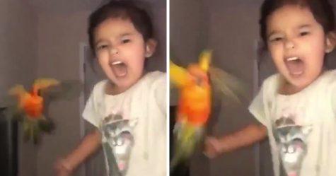 Cette fillette a entraîné son oiseau à attaquer les gens qu'elle choisit et elle ressemble à une super-vilaine dans la vraie vie